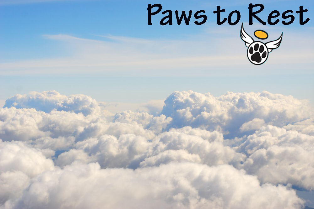 Paws to Rest